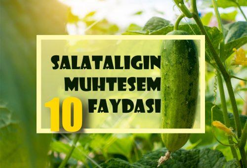 Salatalığın Muhteşem 10 Faydası